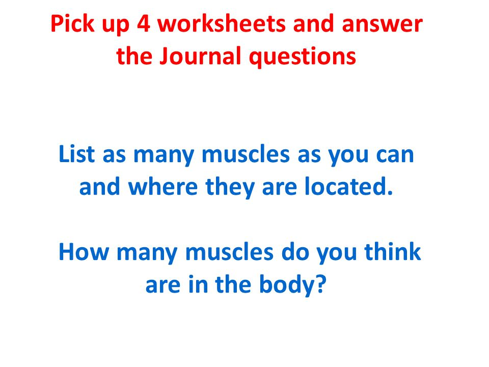Pick up 4 worksheets and answer the Journal questions List as many muscles as you can and where they are located.