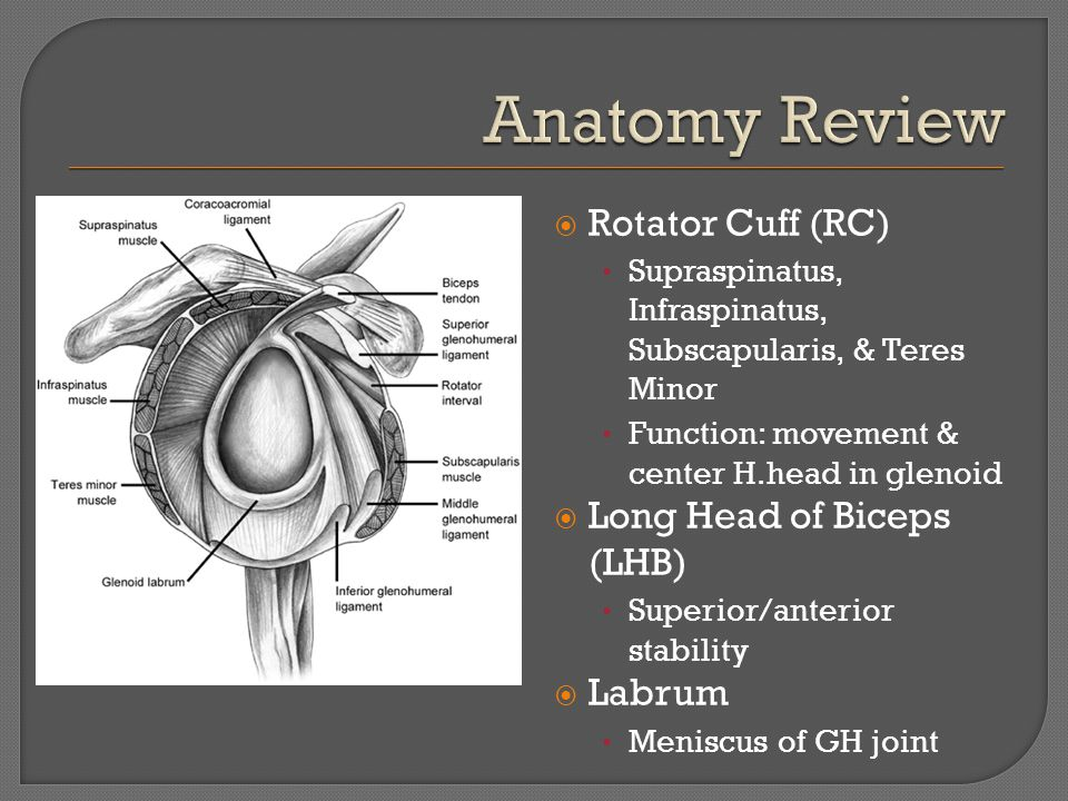  Rotator Cuff (RC) Supraspinatus, Infraspinatus, Subscapularis, & Teres Minor Function: movement & center H.head in glenoid  Long Head of Biceps (LHB) Superior/anterior stability  Labrum Meniscus of GH joint