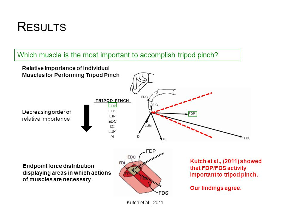 R ESULTS Relative Importance of Individual Muscles for Performing Tripod Pinch TRIPOD PINCH FDP FDS EIP EDC DI LUM PI Which muscle is the most importa