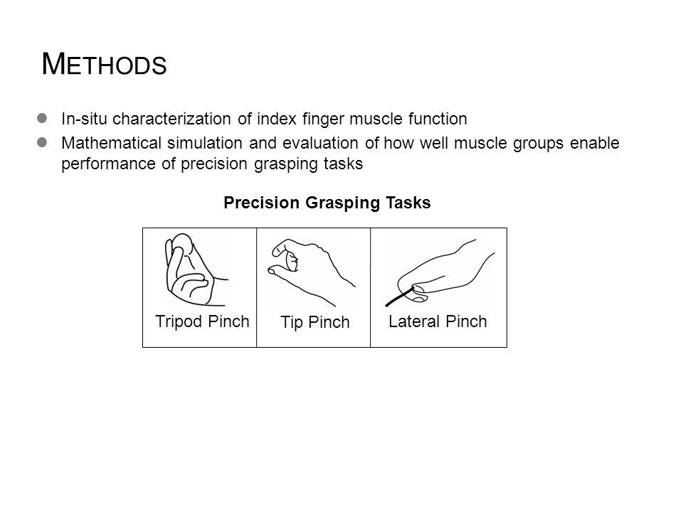 M ETHODS In-situ characterization of index finger muscle function Mathematical simulation and evaluation of how well muscle groups enable performance