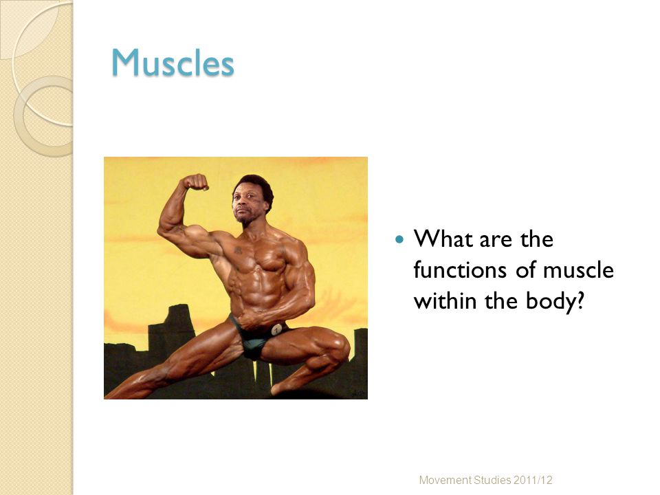 Skeletal Muscle Are all skeletal muscles the same shape.