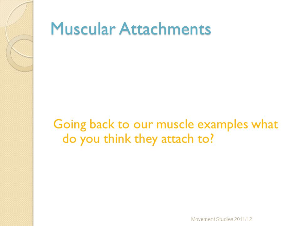 Muscular Attachments Going back to our muscle examples what do you think they attach to? Movement Studies 2011/12