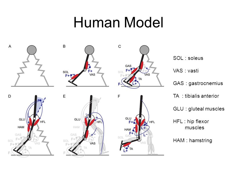 Result Walking Gait - Matlab SimMechanics GRF : ground reaction force