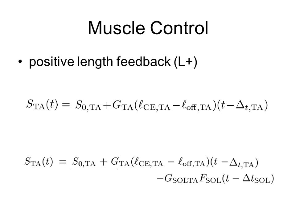 Muscle Control positive length feedback (L+)