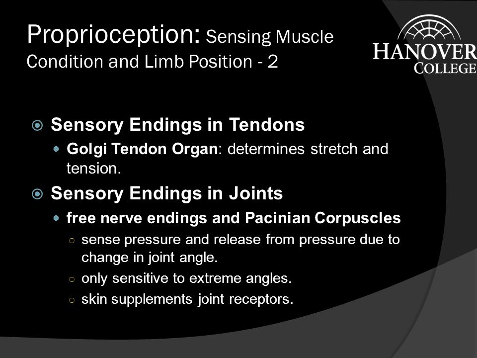 Proprioception: Sensing Muscle Condition and Limb Position  Sensory Endings in Muscles Anulospiral: wraps around muscle spindle, senses dynamic changes in muscle length.