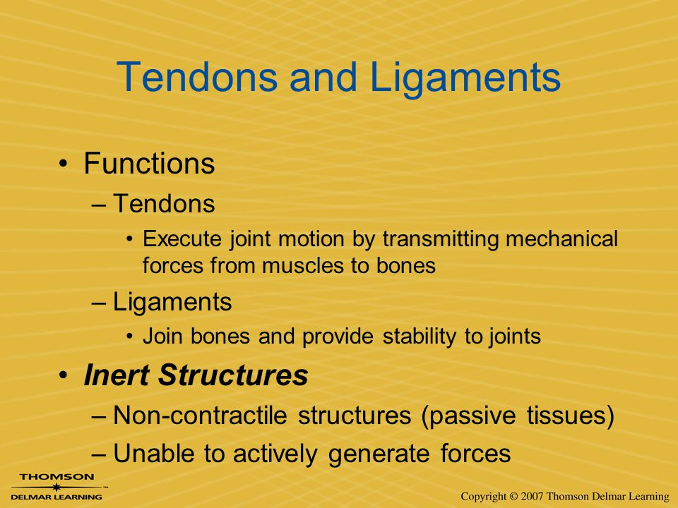Tendons and Ligaments Functions –Tendons Execute joint motion by transmitting mechanical forces from muscles to bones –Ligaments Join bones and provid