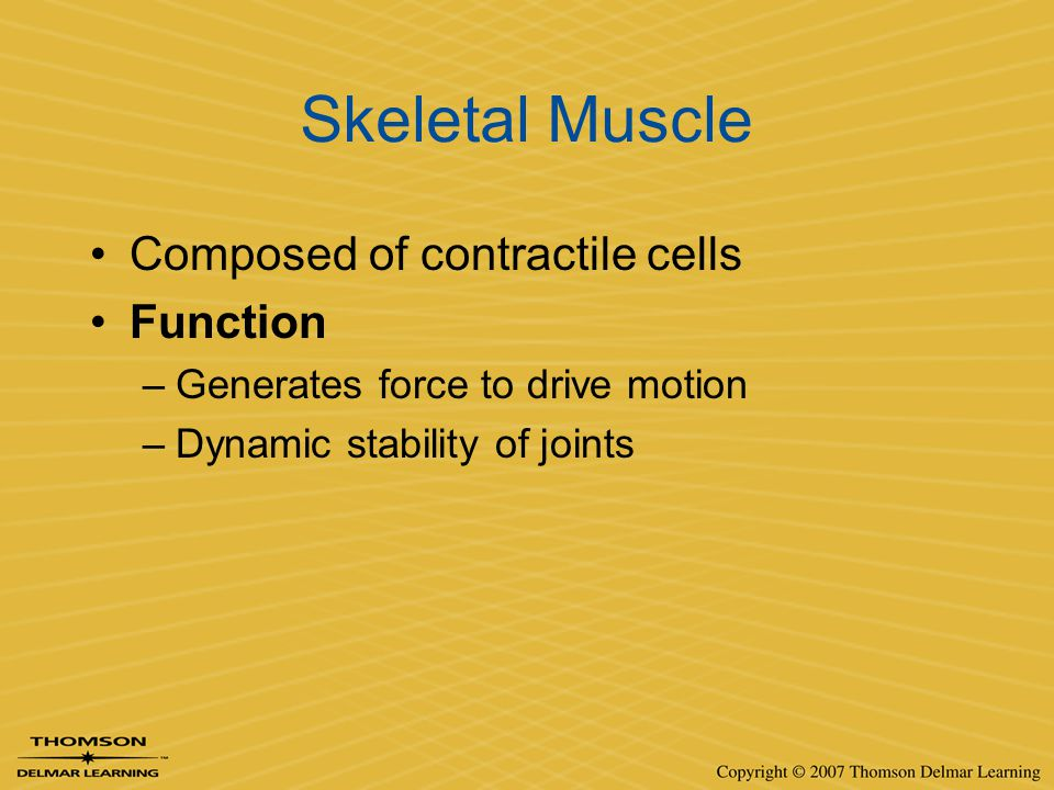 Skeletal Muscle Composed of contractile cells Function –Generates force to drive motion –Dynamic stability of joints
