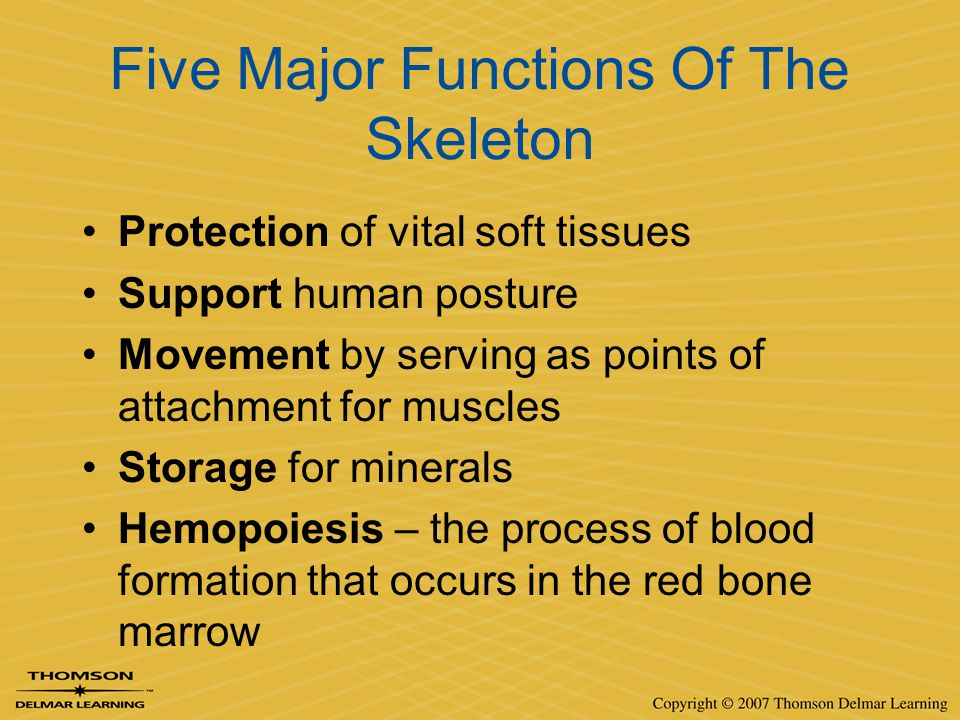 Five Major Functions Of The Skeleton Protection of vital soft tissues Support human posture Movement by serving as points of attachment for muscles St