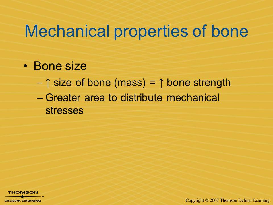 Mechanical properties of bone Bone size –↑ size of bone (mass) = ↑ bone strength –Greater area to distribute mechanical stresses