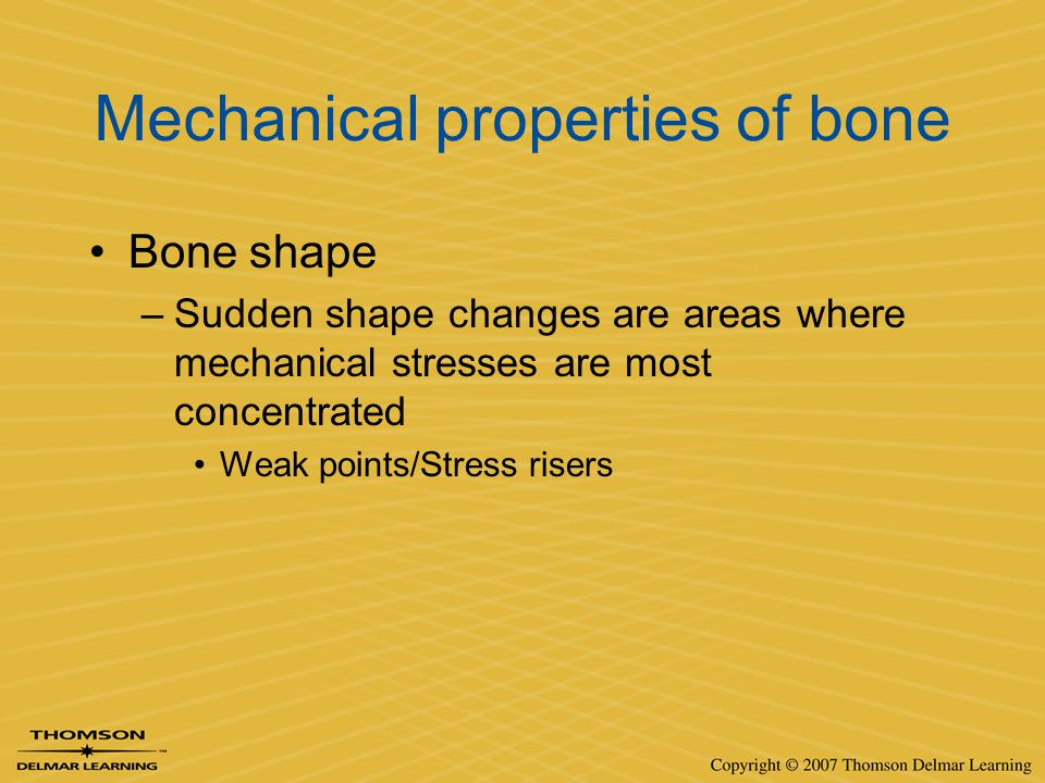 Mechanical properties of bone Bone shape –Sudden shape changes are areas where mechanical stresses are most concentrated Weak points/Stress risers