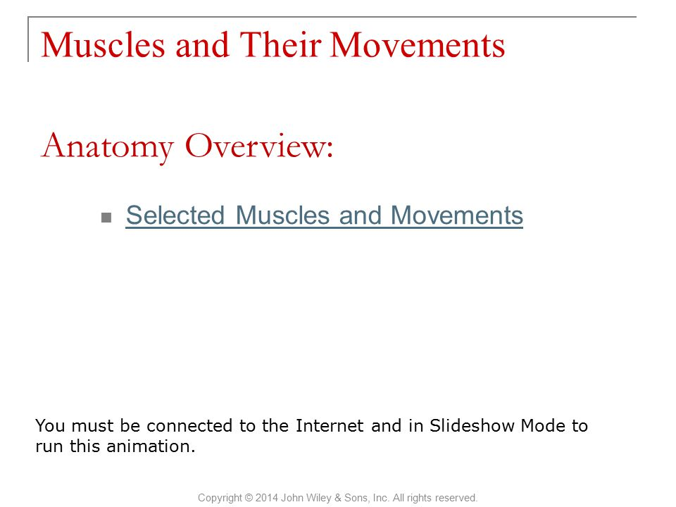 Muscles and Their Movements Copyright © 2014 John Wiley & Sons, Inc. All rights reserved. Selected Muscles and Movements Anatomy Overview: You must be