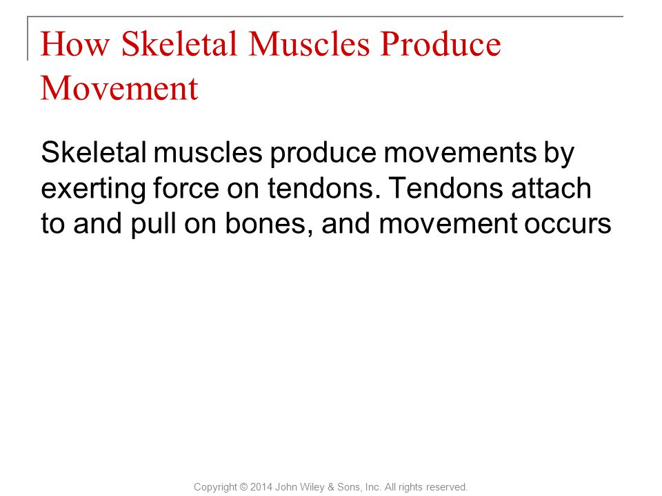 Skeletal muscles produce movements by exerting force on tendons. Tendons attach to and pull on bones, and movement occurs How Skeletal Muscles Produce