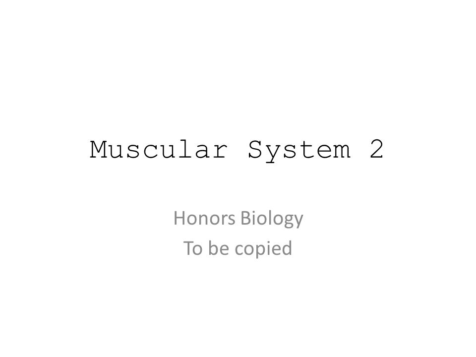 Muscular System 2 Honors Biology To be copied