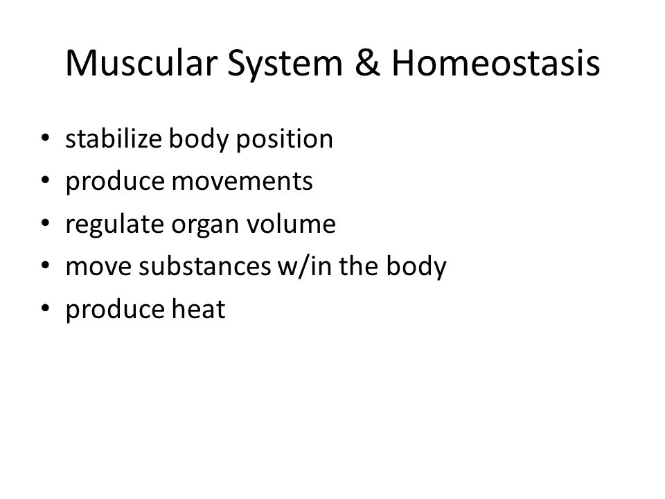 Muscular System & Homeostasis stabilize body position produce movements regulate organ volume move substances w/in the body produce heat