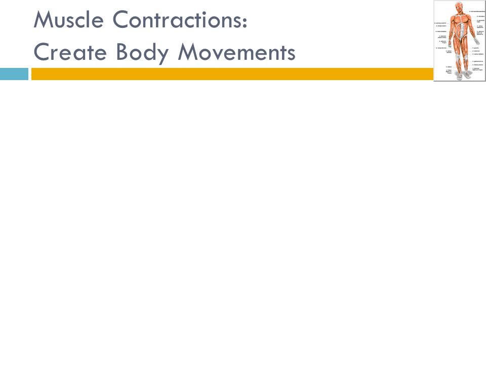Muscle Contractions: Create Body Movements