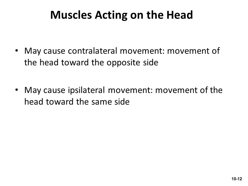 Muscles Acting on the Head May cause contralateral movement: movement of the head toward the opposite side May cause ipsilateral movement: movement of