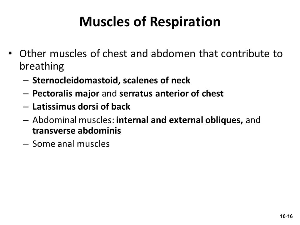 Muscles of Respiration Other muscles of chest and abdomen that contribute to breathing – Sternocleidomastoid, scalenes of neck – Pectoralis major and