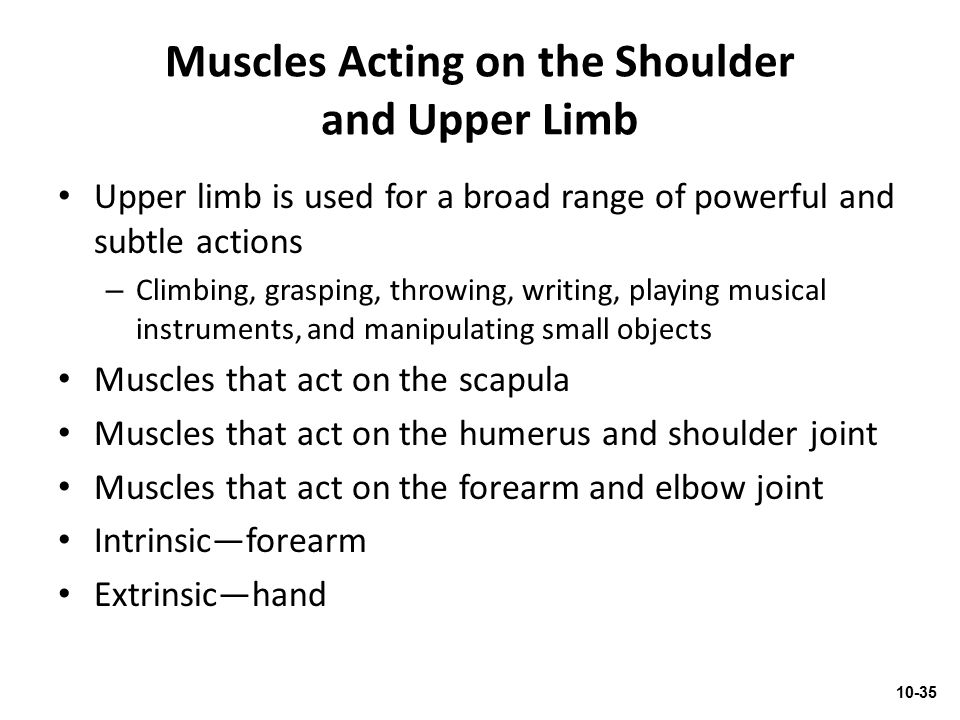 Muscles Acting on the Shoulder and Upper Limb Upper limb is used for a broad range of powerful and subtle actions – Climbing, grasping, throwing, writ