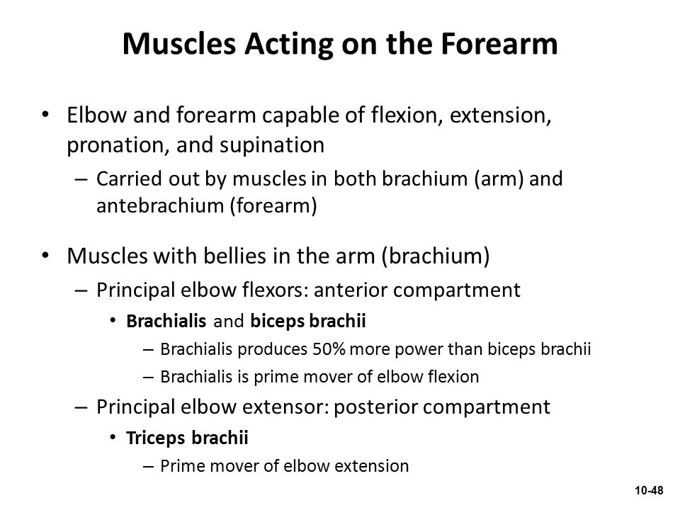 Muscles Acting on the Forearm Elbow and forearm capable of flexion, extension, pronation, and supination – Carried out by muscles in both brachium (ar