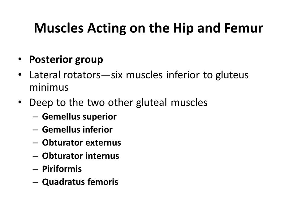 Muscles Acting on the Hip and Femur Posterior group Lateral rotators—six muscles inferior to gluteus minimus Deep to the two other gluteal muscles – G