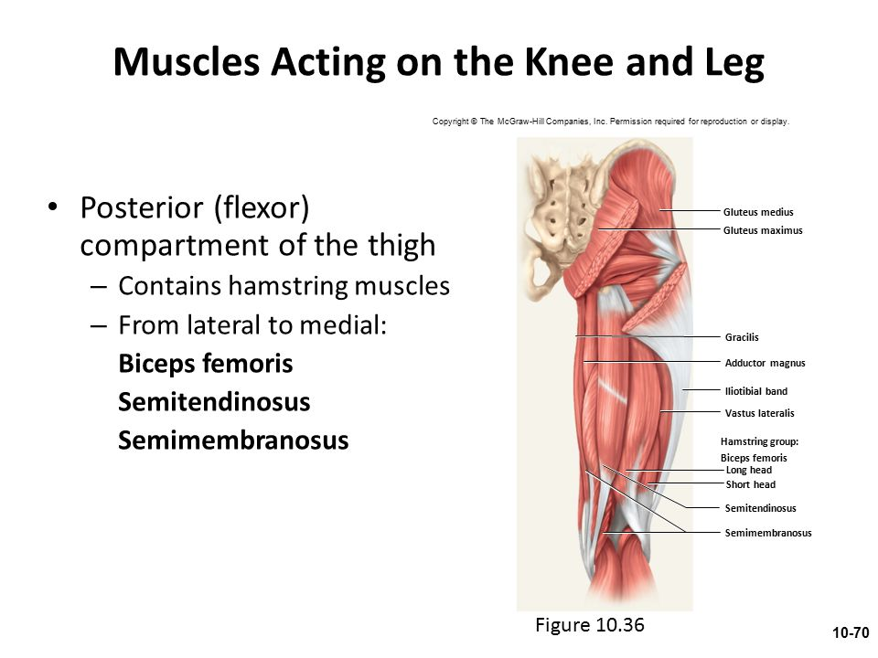 Muscles Acting on the Knee and Leg Posterior (flexor) compartment of the thigh – Contains hamstring muscles – From lateral to medial: Biceps femoris S