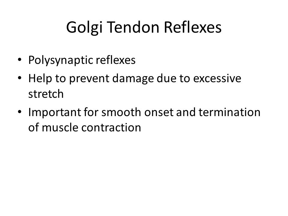 Golgi Tendon Reflexes Polysynaptic reflexes Help to prevent damage due to excessive stretch Important for smooth onset and termination of muscle contr