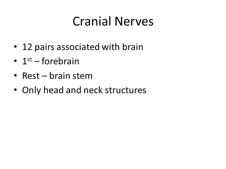 Cranial Nerves 12 pairs associated with brain 1 st – forebrain Rest – brain stem Only head and neck structures