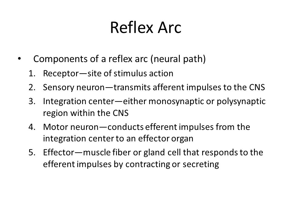 Reflex Arc Components of a reflex arc (neural path) 1.Receptor—site of stimulus action 2.Sensory neuron—transmits afferent impulses to the CNS 3.Integ