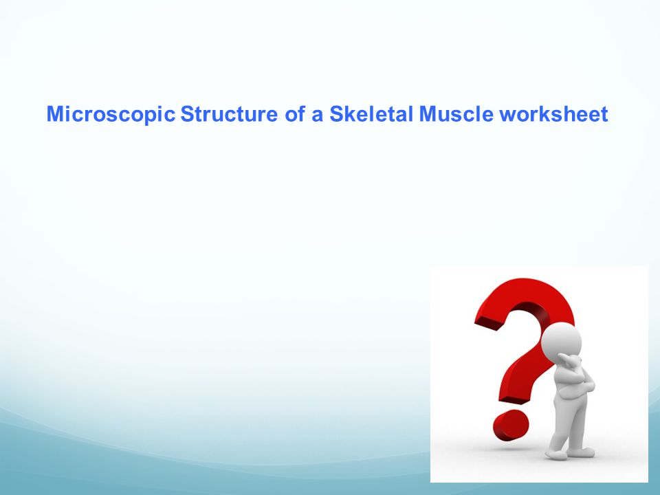 Microscopic Structure of a Skeletal Muscle worksheet