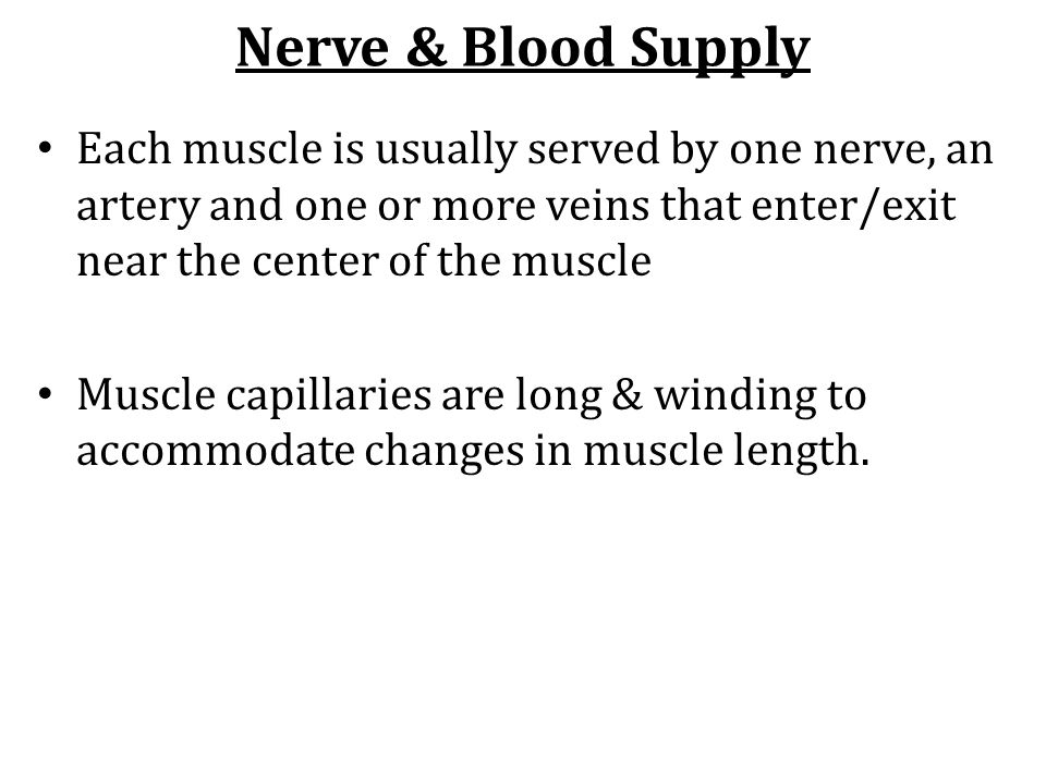 Nerve & Blood Supply Each muscle is usually served by one nerve, an artery and one or more veins that enter/exit near the center of the muscle Muscle
