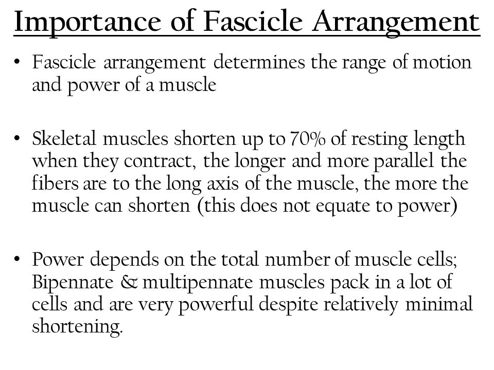 Importance of Fascicle Arrangement Fascicle arrangement determines the range of motion and power of a muscle Skeletal muscles shorten up to 70% of res