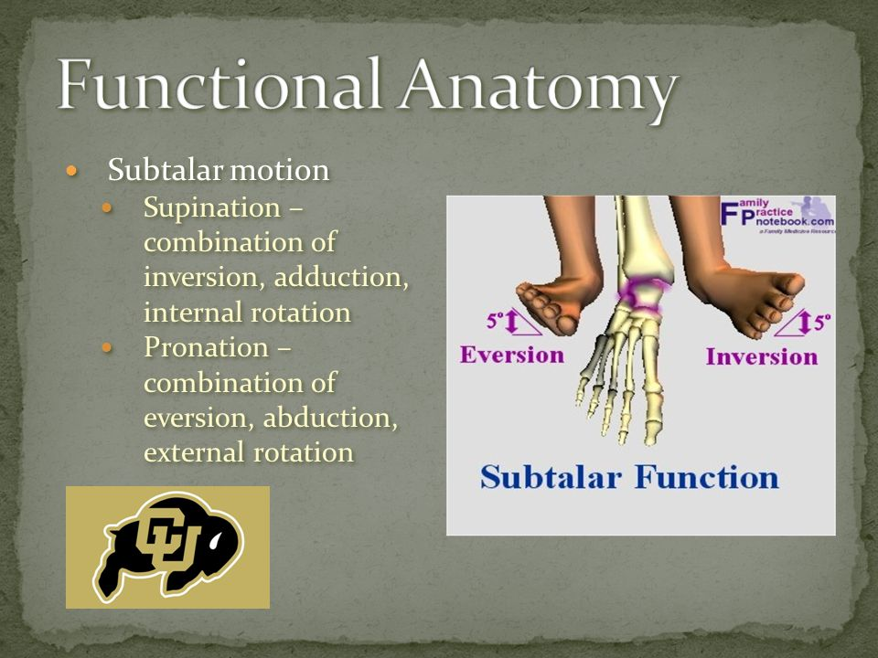 Subtalar motion Supination – combination of inversion, adduction, internal rotation Pronation – combination of eversion, abduction, external rotation