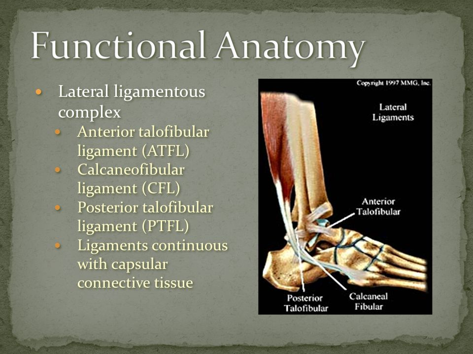 Lateral ligamentous complex Anterior talofibular ligament (ATFL) Calcaneofibular ligament (CFL) Posterior talofibular ligament (PTFL) Ligaments contin