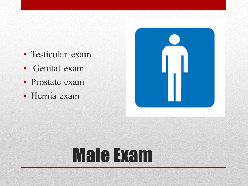 Male Exam Testicular exam Genital exam Prostate exam Hernia exam