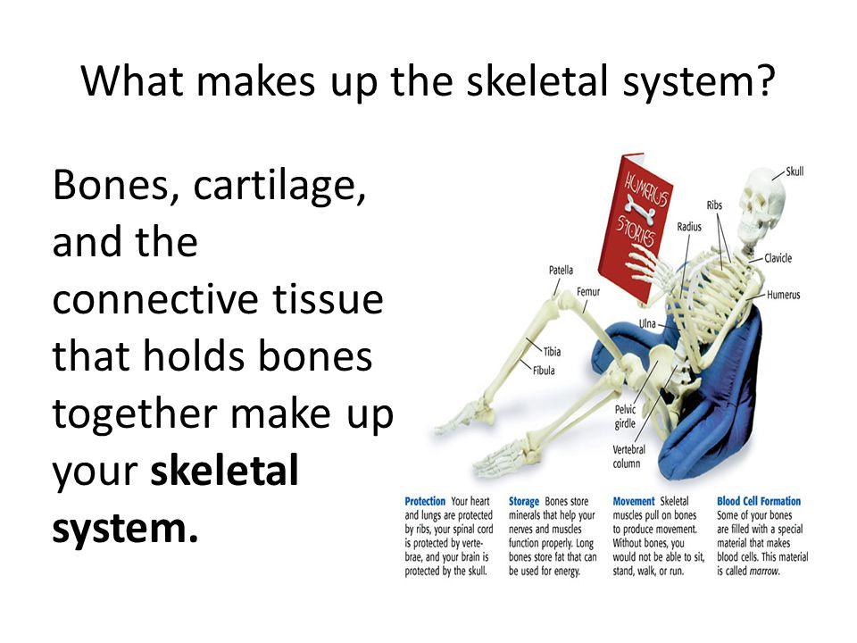 What makes up the skeletal system? Bones, cartilage, and the connective tissue that holds bones together make up your skeletal system.
