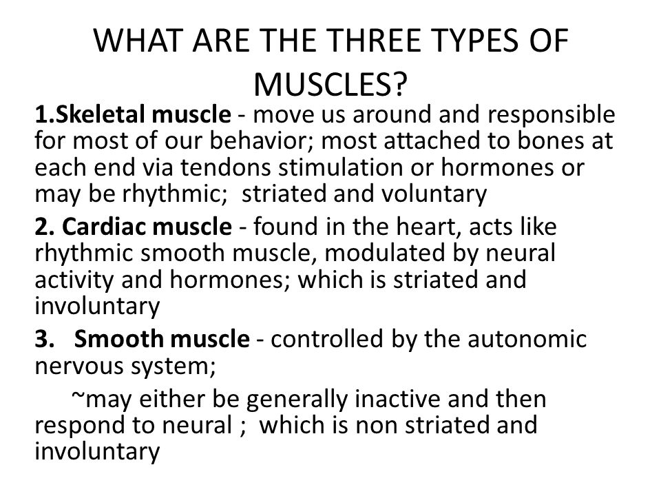 WHAT ARE THE THREE TYPES OF MUSCLES? 1.Skeletal muscle - move us around and responsible for most of our behavior; most attached to bones at each end v