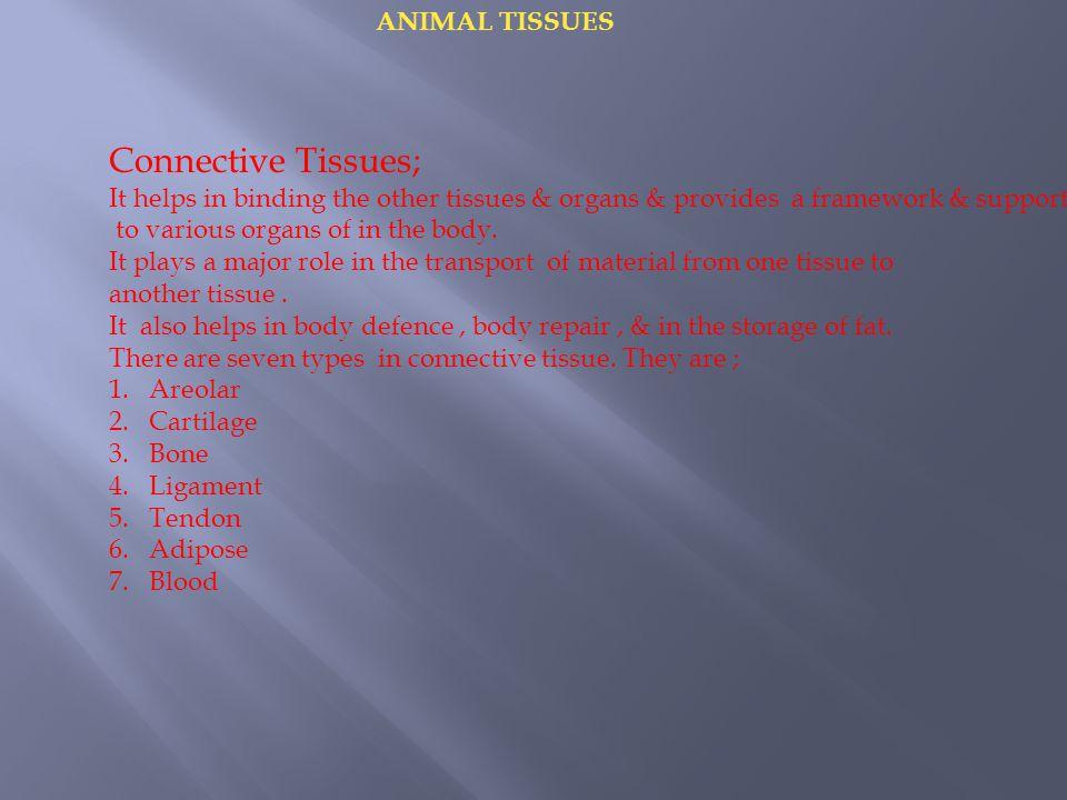 ANIMAL TISSUES Aerolar Tissue:  It joins different tissues.