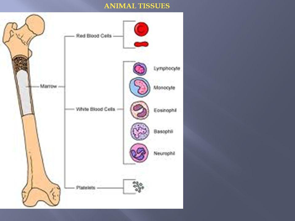 Bone:  It is made up of calcium + phosphate + calcium carbonate.