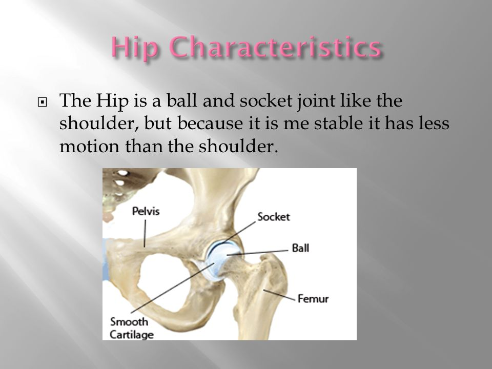  The Hip is a ball and socket joint like the shoulder, but because it is me stable it has less motion than the shoulder.