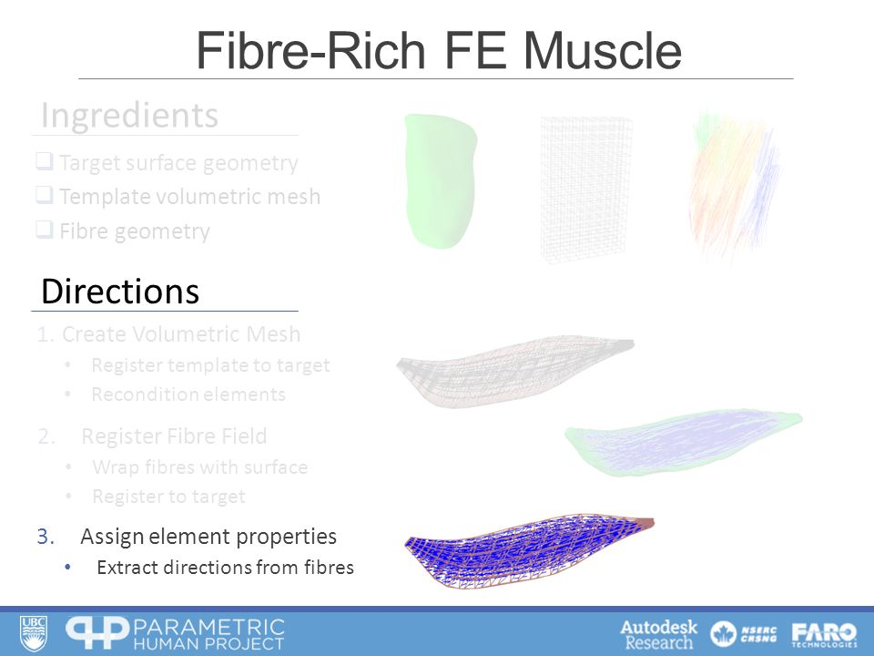 2.Register Fibre Field Wrap fibres with surface Register to target 1.Create Volumetric Mesh Register template to target Recondition elements  Target surface geometry  Template volumetric mesh  Fibre geometry Ingredients 3.Assign element properties Extract directions from fibres Fibre-Rich FE Muscle Directions