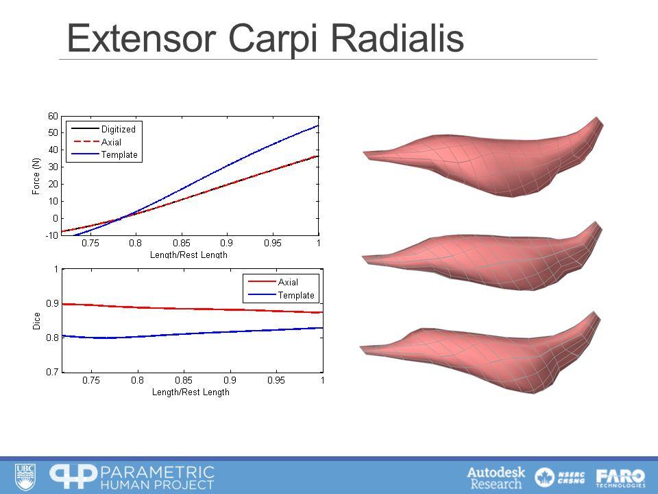 Extensor Carpi Radialis