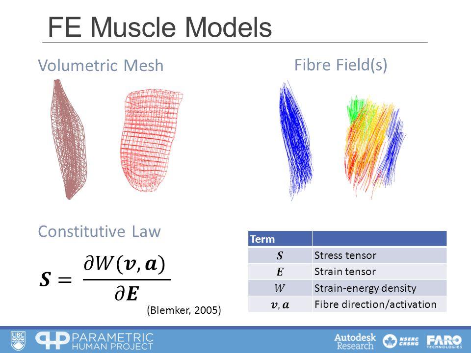 FE Muscle Models Term Stress tensor Strain tensor Strain-energy density Fibre direction/activation Volumetric Mesh Fibre Field(s) Constitutive Law (Blemker, 2005)