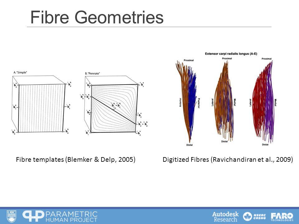 Fibre Geometries Fibre templates (Blemker & Delp, 2005)Digitized Fibres (Ravichandiran et al., 2009)