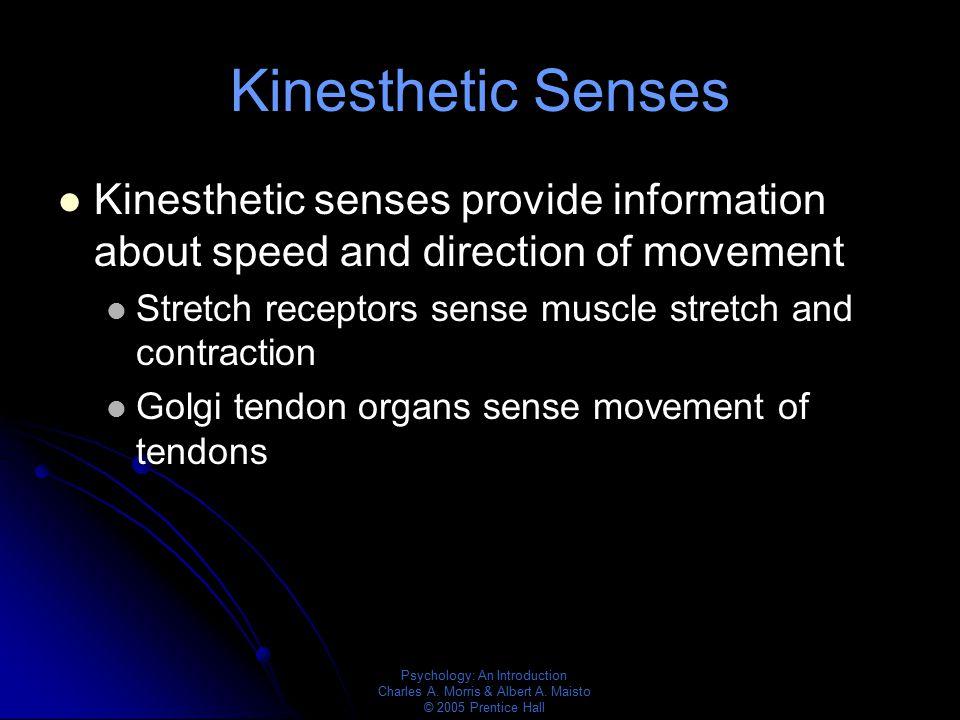 Psychology: An Introduction Charles A. Morris & Albert A. Maisto © 2005 Prentice Hall Kinesthetic Senses Kinesthetic senses provide information about