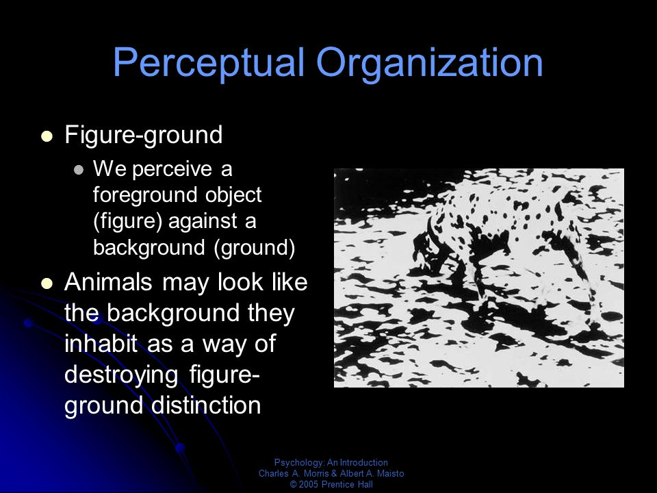 Psychology: An Introduction Charles A. Morris & Albert A. Maisto © 2005 Prentice Hall Perceptual Organization Figure-ground We perceive a foreground o