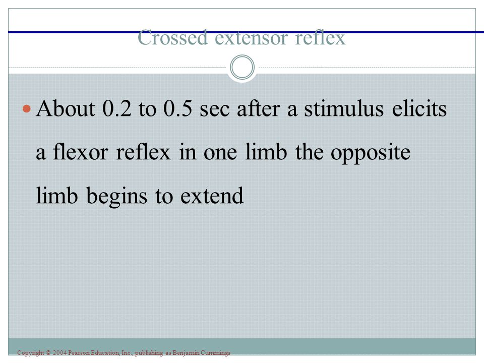 About 0.2 to 0.5 sec after a stimulus elicits a flexor reflex in one limb the opposite limb begins to extend Crossed extensor reflex