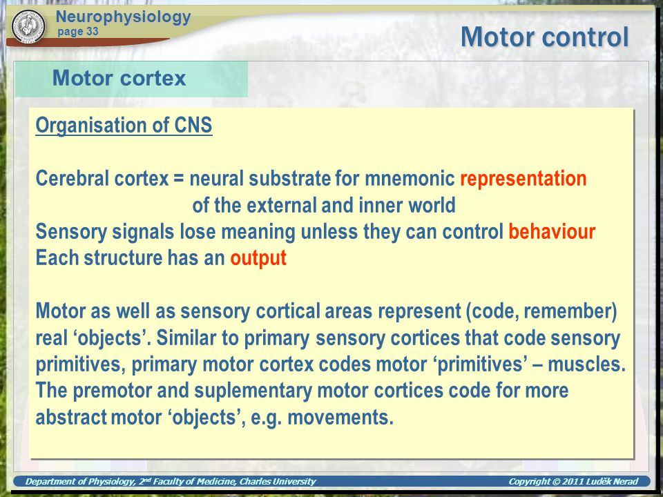 Department of Physiology, 2 nd Faculty of Medicine, Charles University Copyright © 2011 Luděk Nerad Motor control Neurophysiology page 33 Motor cortex