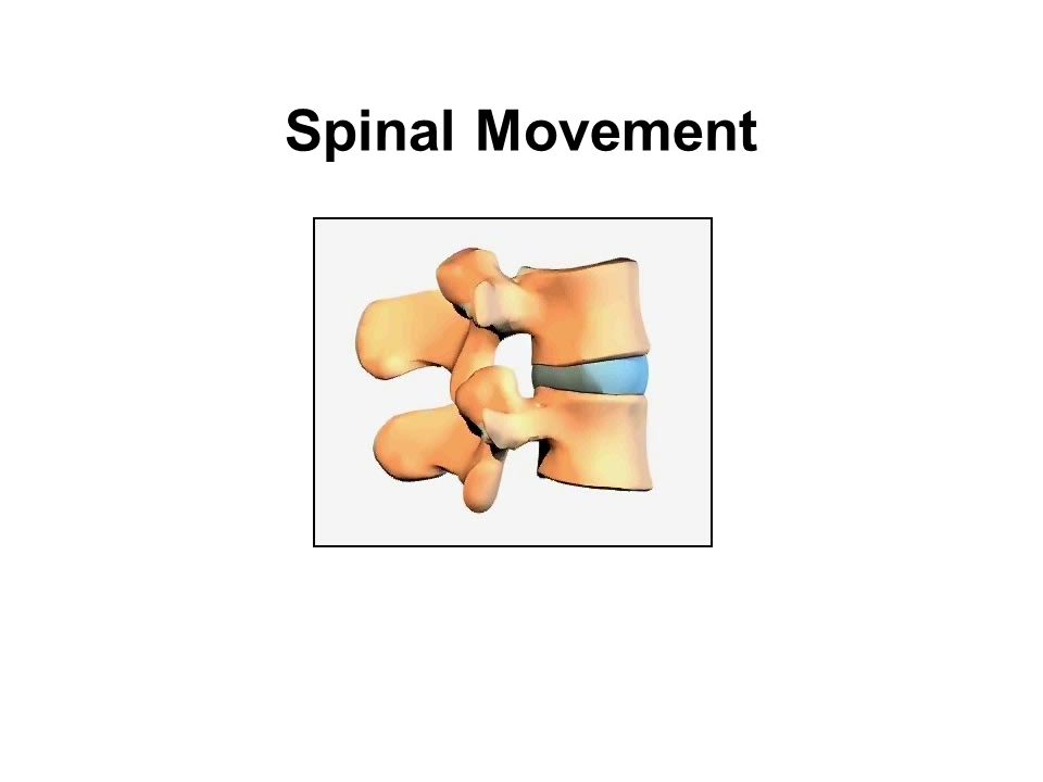 Spinal Movement