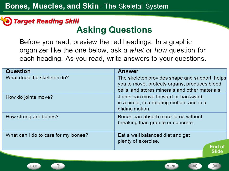 Bones, Muscles, and Skin QuestionAnswer Asking Questions Before you read, preview the red headings. In a graphic organizer like the one below, ask a w
