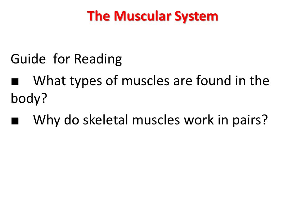 The Muscular System Guide for Reading ■ What types of muscles are found in the body? ■ Why do skeletal muscles work in pairs?